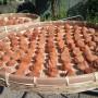 祝日の無い6月は親子で梅干し作りを楽しもう!梅干しで夏バテ予防